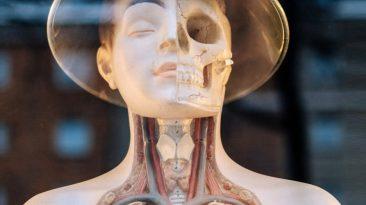 squelette et visage avec un chapeau chinois